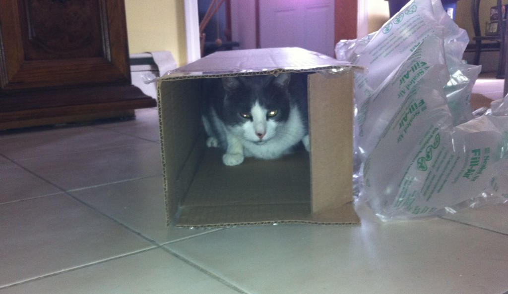 Indy peers out of the box. How'd he get in there?
